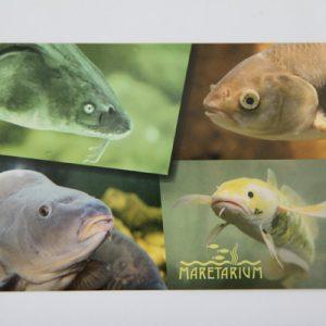 Postikortti, Maretariumin kalat